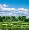 Park with exactly topiary trees Stock Photos