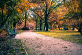 Park in fall Royalty Free Stock Image