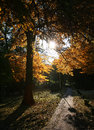 Park in the fall with trees sun shining through Royalty Free Stock Photo