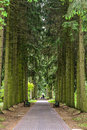 Park with firs mysterious and walkway Stock Photography
