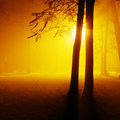 Park on a foggy night brightly lit Royalty Free Stock Photography