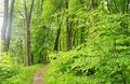 Park with green grass and trees spring nature beautiful landscape Stock Photos