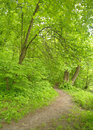 Park with green grass and trees spring nature beautiful landscape Royalty Free Stock Photo