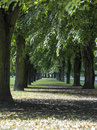 Park landscape with a long alley Royalty Free Stock Photo