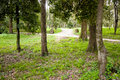 Park of mon repo in corfu with trees and paths island Stock Photo