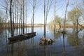 Park of ois da ribeira aveiro portugal europa Royalty Free Stock Image