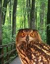 Park orłów young Obraz Royalty Free