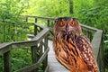 Park orłów young Zdjęcie Stock