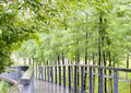 Park path after the rain Royalty Free Stock Images