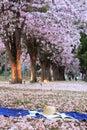 Park of pink trumpet tree