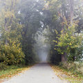 Park road with fog in autumn Royalty Free Stock Images