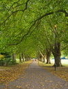 Park Scene from Cambridge, UK Royalty Free Stock Photography