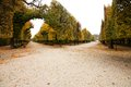 Park schonbrunn aesthetically trimmed trees in the castle garden in vienna Royalty Free Stock Photography