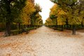 Park schonbrunn aesthetically trimmed trees in the castle garden in vienna Stock Photo