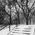 Park during snowstorm a sudden in montreal canada photo taken with iphone Royalty Free Stock Photography