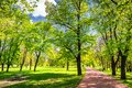 Park in the spring with green lawn, sun light. Stone pathway in Royalty Free Stock Photo