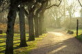 Park in spring time Royalty Free Stock Photo