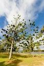 Park beside Tinaroo Lake Royalty Free Stock Photo