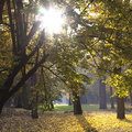 Park with trees in autumn Royalty Free Stock Photo