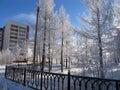 Park. Winter Landscape Of Natu...