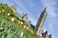 Parliament Building Ottawa and Tulips #4 Royalty Free Stock Images