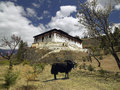 Paro dzong kingdom of bhutan a yak near monastery near the town in the Stock Photo