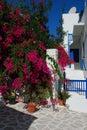 Paros island, bougainvillea in a courtyard. Greece Royalty Free Stock Photo