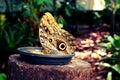 Parque das aves, Brasil Royalty Free Stock Photo