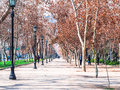 Parque Forestal Royalty Free Stock Photo