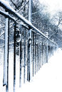 Parque urbano snow-covered silencioso no inverno Fotografia de Stock Royalty Free