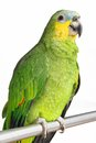 The parrot. Royalty Free Stock Image