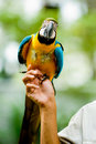 A Parrot Royalty Free Stock Photo