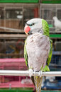 The parrot Stock Photography