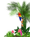 Parrot Background Royalty Free Stock Image