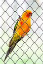 Parrot bird beatuiful for background Royalty Free Stock Images