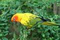 Parrot birds Royalty Free Stock Photo