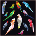 Parrot birds set of colorful low poly on black background sun bourke budgerigar pink blue rose ringed parakeet cock han gang Stock Photography