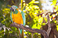 Parrot on branch macaw perched a Stock Photography