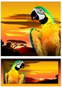 Parrot in bright colors vector image of the on the background of the african landscape Royalty Free Stock Photography