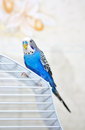 Parrot on a cage Stock Photography