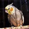 Parrot in a cage big colorful Royalty Free Stock Image
