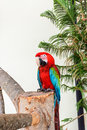 Parrot in captivity at zoo Stock Photo
