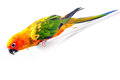 Parrot with colorful feathers Stock Photos
