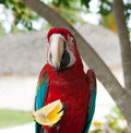 A parrot, Dominican Republic Royalty Free Stock Images