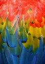 Parrot feathers background Royalty Free Stock Photo