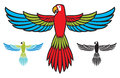 Parrot flying wings spread Stock Images