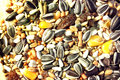 Parrot food mix complete in details Stock Photography