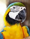 Parrot in green rainforest. Royalty Free Stock Images