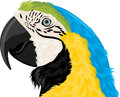 Parrot head Stock Photo