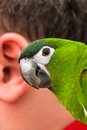 Parrot and the human ear macro view of Stock Photo